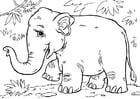 Bilde å fargelegge asiatisk elefant