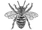 Bilde å fargelegge bie-dronning