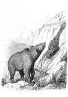 Bilde å fargelegge bjørn