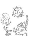 Bilde å fargelegge blekksprut og pufferfisk svømmer rundt