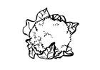 Bilde å fargelegge blomkÃ¥l