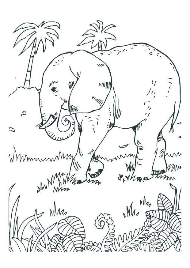 bilde 229 fargelegge elefant bil 12527