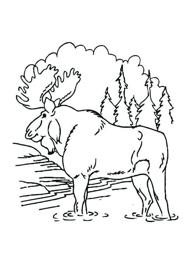 bilde  u00e5 fargelegge elg