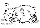 Bilde å fargelegge en bjørn som sover