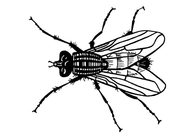 bilde å fargelegge flue  gratis bildene for fargelegging
