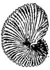 Bilde å fargelegge fossil