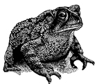 Bilde å fargelegge frosk