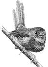 Bilde å fargelegge fugl