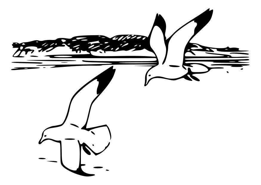 Bilde fargelegge fugler m ker bil 19013 - Immagini da colorare la spiaggia ...