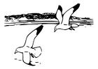 Bilde å fargelegge fugler - mÃ¥ker