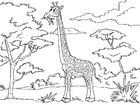 Bilde å fargelegge giraff