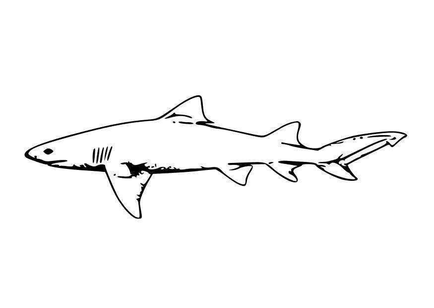 Bilde fargelegge hai bil 10228 for Immagini squali da stampare