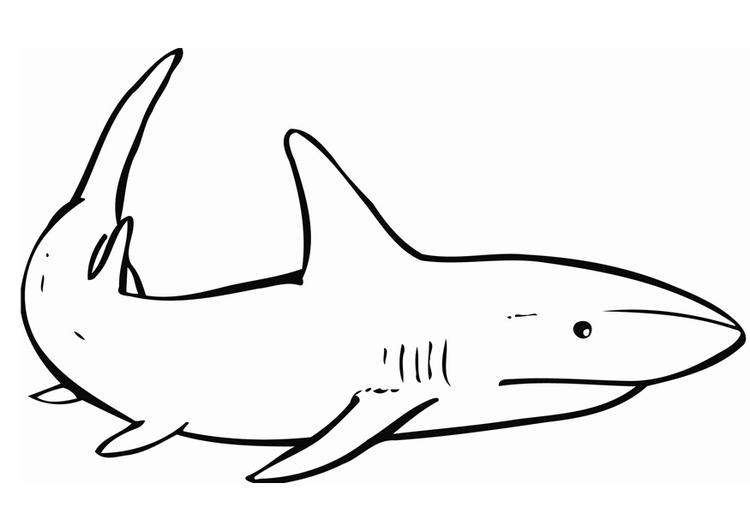 Kleurplaten Dieren Haaien besides Zebra Bullhead Shark likewise Haaien in addition 620 likewise Kleurplaat Dinosaurus 28. on kleurplaat haai