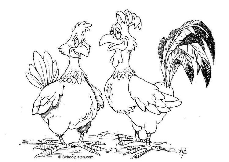 bilde å fargelegge hane og høne  gratis bildene for