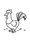 Bilde å fargelegge hane