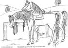 Bilde å fargelegge hest med sal