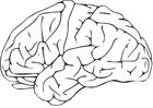 Bilde å fargelegge hjerne