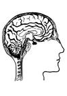 Bilde å fargelegge hjerner