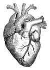Bilde å fargelegge hjerte