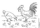 Bilde å fargelegge høne, hane og kyllinger