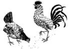 Bilde å fargelegge høne og hane