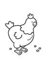 Bilde å fargelegge høne