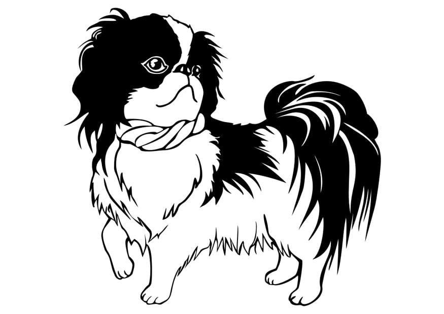 Afbeeldingen Honden Kleurplaten Bilde 229 Fargelegge Hund Shih Tzu Bil 29834