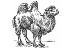 Bilde å fargelegge kamel