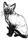 Bilde å fargelegge katt