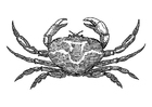 Bilde å fargelegge krabbe