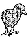 Bilde å fargelegge kylling