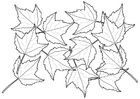 Bilde å fargelegge løv
