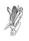Bilde å fargelegge mais