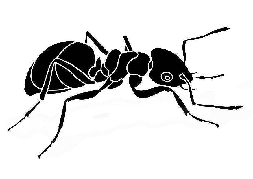bilde å fargelegge maur  gratis bildene for fargelegging