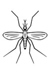 Bilde å fargelegge mygg