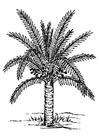 Bilde å fargelegge palmetre