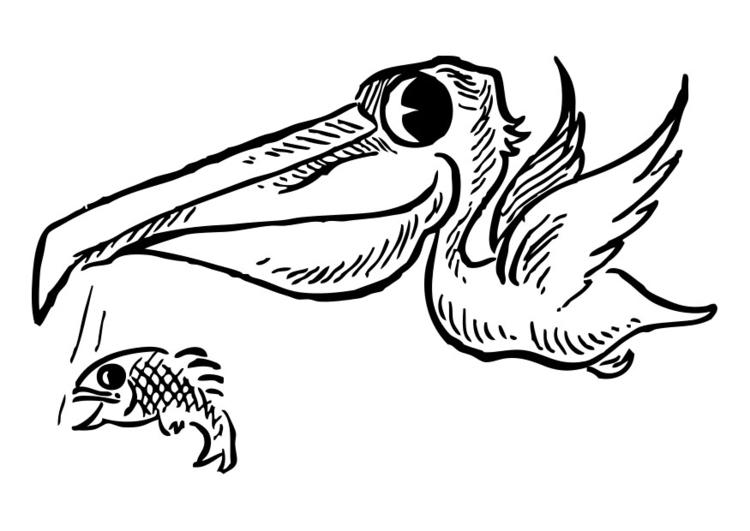 Orka Kleurplaat Bilde 229 Fargelegge Pelikan Med Fisk Gratis Bildene For