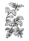 Bilde å fargelegge plante