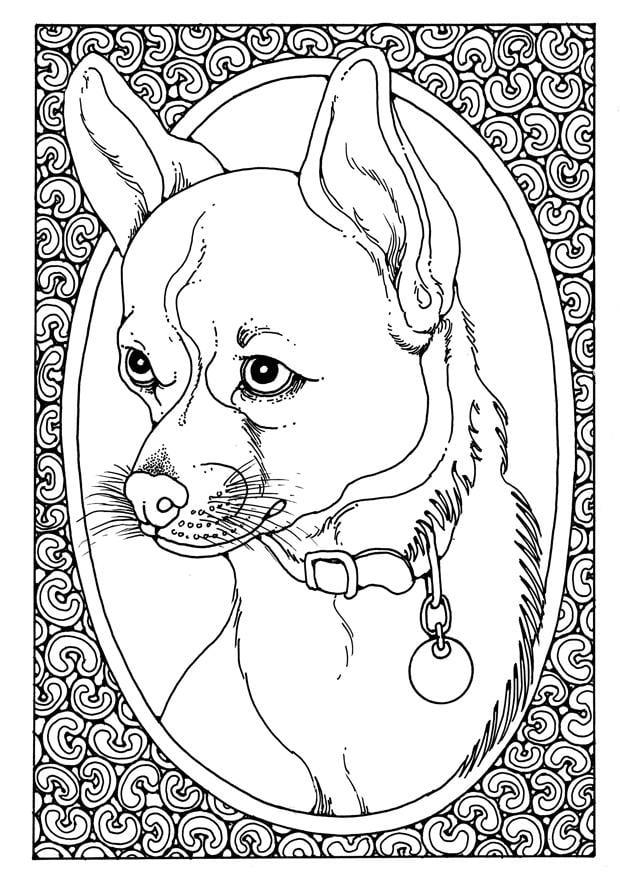Bilde 229 Fargelegge Portrett Av Hund Bil 28205