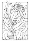 Bilde å fargelegge protea