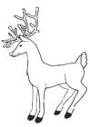 Bilde å fargelegge reinsdyr
