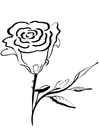 Bilde å fargelegge rose