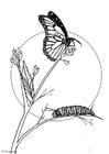 Bilde å fargelegge sommerfugl