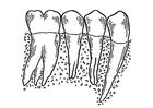 Bilde å fargelegge tann
