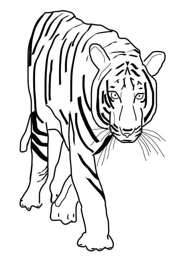 Kleurplaten Dieren Makkelijk Bilde 229 Fargelegge Tiger Gratis Bildene For Fargelegging