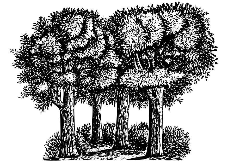 Dibujos De Arboles Coloreados: Bilde å Fargelegge Trær