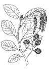 Bilde å fargelegge tre - blader