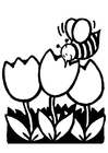 Bilde å fargelegge tulipaner