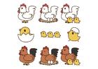 bilde fra egg til høne
