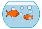 bilde gullfisk